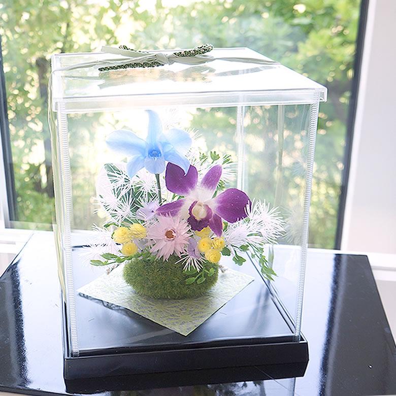 爽やかな色合いの デンファレの花が気分も凜とさせてくれる